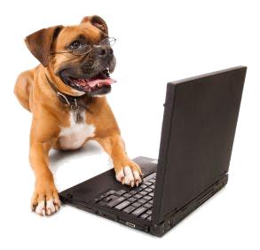 dog-laptop(1) kopiera