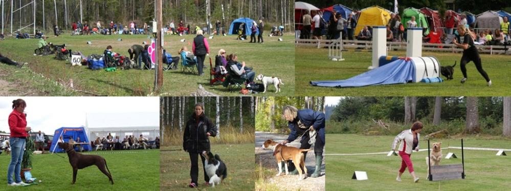 collage-åretshund