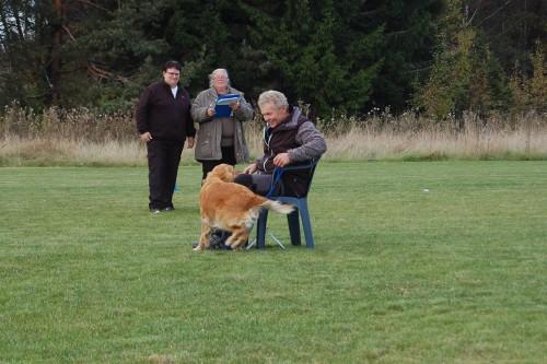 gladaste hund i rally